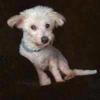 Adopt A Pet :: Baby - Van Nuys, CA