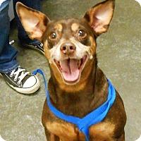 Adopt A Pet :: Reese - Lancaster, PA