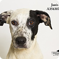 Adopt A Pet :: Janis - Baton Rouge, LA
