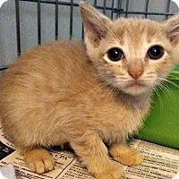 Adopt A Pet :: Sadie - Jefferson, NC