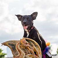 Adopt A Pet :: Missandei - New City, NY
