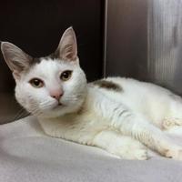 Adopt A Pet :: Lizzie - Norfolk, VA