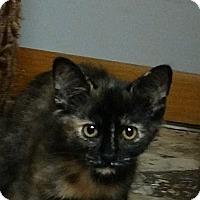 Adopt A Pet :: Pebbles Flintstone - Garden City, MI