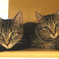 Adopt A Pet :: Iris and Poppy - Colmar, PA