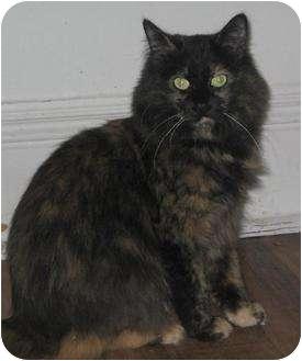 Domestic Longhair Cat for adoption in Orillia, Ontario - Hope