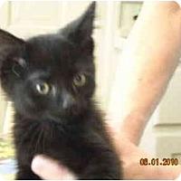 Adopt A Pet :: Brett - Riverside, RI