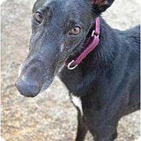 Adopt A Pet :: Tyson (Ear Biter) - Chagrin Falls, OH