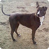 Adopt A Pet :: Hanna - Toledo, OH