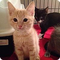 Adopt A Pet :: Oliver - East Hanover, NJ