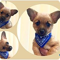 Adopt A Pet :: Rico - Morgantown, WV