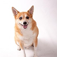 Adopt A Pet :: Toby Mumma - Elizabethtown, PA