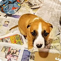Adopt A Pet :: Xanthos*ADOPTED!* - Chicago, IL