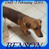 Adopt A Pet :: BENSON - $250 - Jersey City, NJ