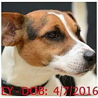Adopt A Pet :: Clooney - Siler City, NC