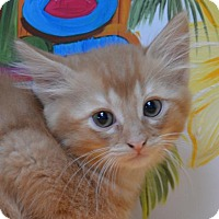 Adopt A Pet :: Louie - Englewood, FL