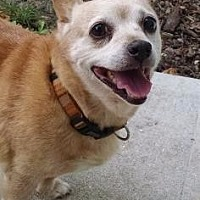 Adopt A Pet :: Abbey - Fort Myers, FL