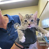 Adopt A Pet :: Flash - Douglasville, GA