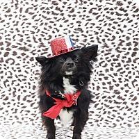 Adopt A Pet :: Barkley-ADOPT Me! - Redondo Beach, CA