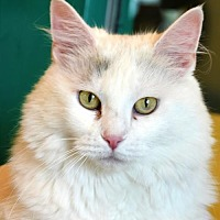 Adopt A Pet :: Mallory - Lakewood, CO