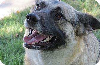 Swedish Vallhund/German Shepherd Dog Mix Dog for adoption in Scottsdale, Arizona - Princess