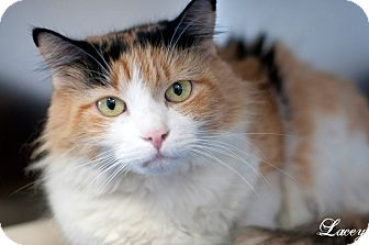 Calico Cat for adoption in Manahawkin, New Jersey - Lacey