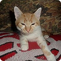 Adopt A Pet :: Wesson - Norwich, NY