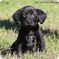 Adopt A Pet :: Chloe - Bradenton, FL