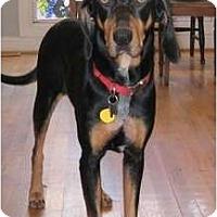 Adopt A Pet :: Spooky - Dallas, TX
