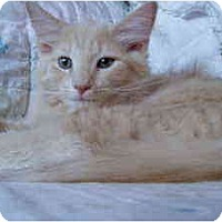 Adopt A Pet :: Dandelion - Arlington, VA