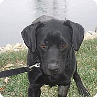 Adopt A Pet :: Casey - Lewisville, IN