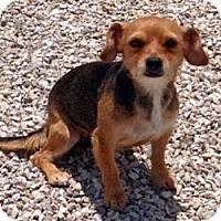 Adopt A Pet :: Robin - Greendale, WI