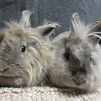Adopt A Pet :: Ana & Brooklyn - Newport, DE
