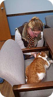 Domestic Shorthair Cat for adoption in Albemarle, North Carolina - Theodore Jack