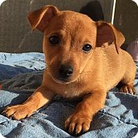 Adopt A Pet :: Dahli#2M - Orlando, FL