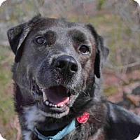 Adopt A Pet :: STAN - Pittsburgh, PA