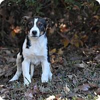 Adopt A Pet :: Rossi - South Dennis, MA