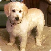 Adopt A Pet :: DYLAN - Rancho Cucamonga, CA