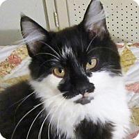 Adopt A Pet :: Pilot - Davis, CA