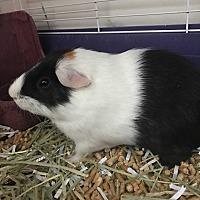 Adopt A Pet :: Alex - Manhattan, KS