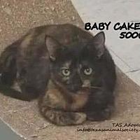Adopt A Pet :: Baby Cakes - Spring, TX