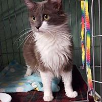 Adopt A Pet :: MADORI - Phoenix, AZ