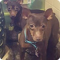 Adopt A Pet :: Jack and Fritz - Hazelwood, MO