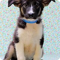 Adopt A Pet :: Owen - Waldorf, MD