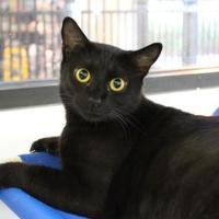 Adopt A Pet :: Mattie - Brunswick, GA