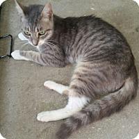 Adopt A Pet :: Gabby - Mims, FL