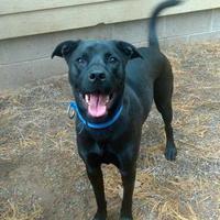 Adopt A Pet :: Atreyu - Houghton, MI