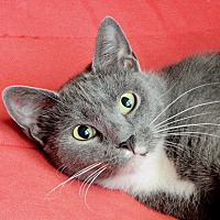 Adopt A Pet :: Lark - Long Beach, NY