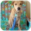 Photo 1 - Retriever (Unknown Type) Mix Puppy for adoption in Houston, Texas - Rosie