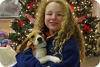 Beagle Dog for adoption in Elyria, Ohio - Rose