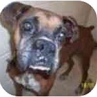 Adopt A Pet :: Calvin - Thomasville, GA